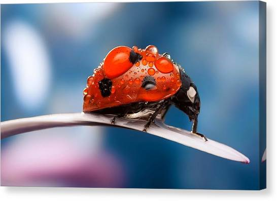 The Bug Canvas Print