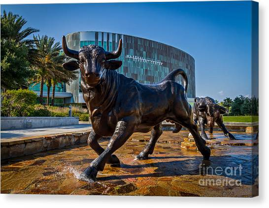 University Of South Florida Canvas Print - The Bulls by Karl Greeson