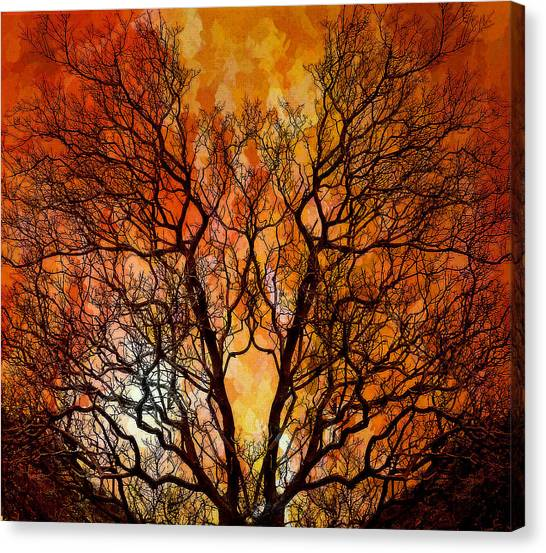 The Burning Bush Canvas Print by Lynn Andrews