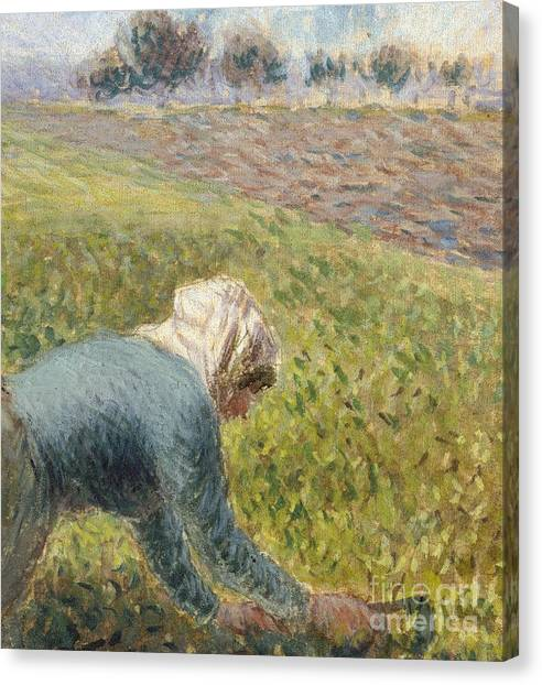 Cabbage Canvas Print - The Cabbage Gatherers  Detail by Camille Pissarro