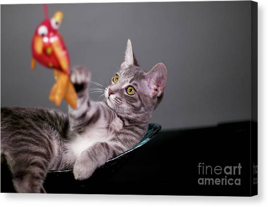 The Cat And The Fish Canvas Print