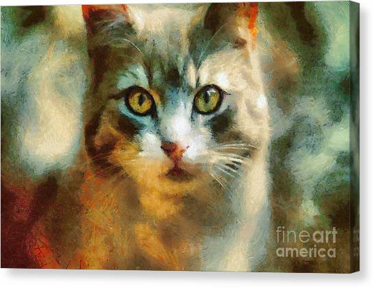 The Cat Eyes Canvas Print