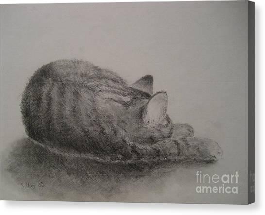 The Cat Series II Canvas Print by Sabina Haas