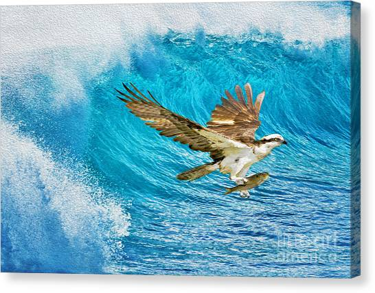 Osprey Canvas Print - The Catch by Laura D Young