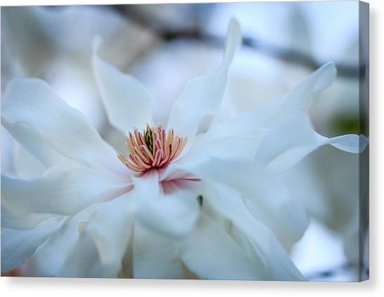 The Center Of Beauty Canvas Print