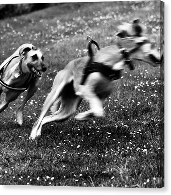 Canvas Print - The Chasing Game. Ava Loves Being by John Edwards