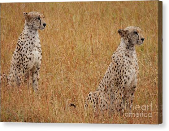 Cheetahs Canvas Print - The Cheetahs by Smart Aviation