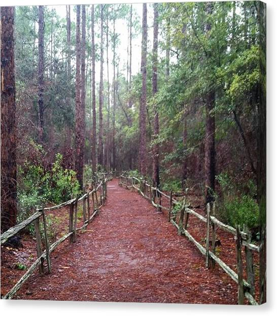 Okefenokee Canvas Print - The Chesser Island Hiking Trail At The by Karen Breeze