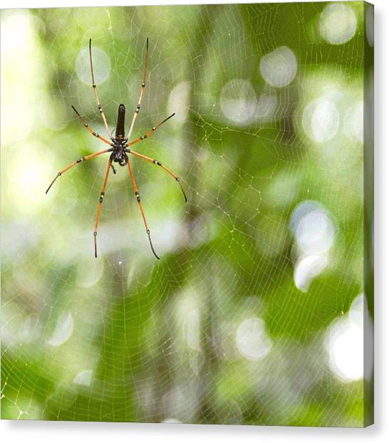 Wetlands Canvas Print - The Circle Of Life.  Golden Web by Freddie Tay