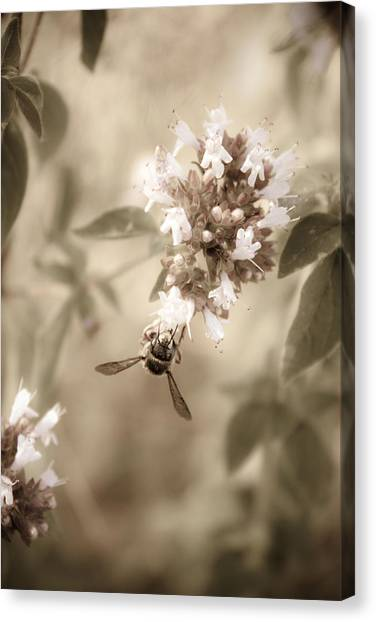 Wasp.insect Canvas Print - The Collector by Danielle Silveira