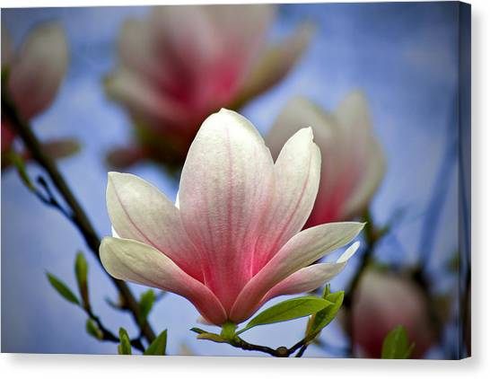 Bloom Canvas Print - The Color Of Spring by Evelina Kremsdorf