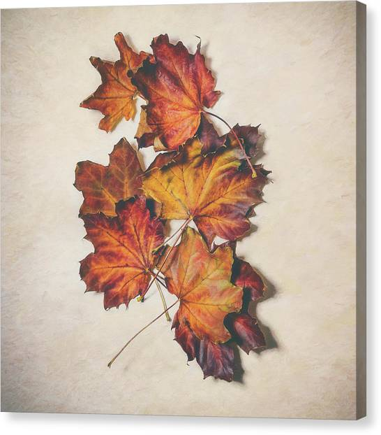 Maple Season Canvas Print - The Colors Of Fall by Scott Norris