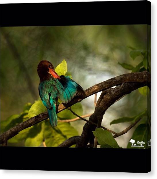 Kingfisher Canvas Print - The Colourful King  When The First by Nayan Hazra