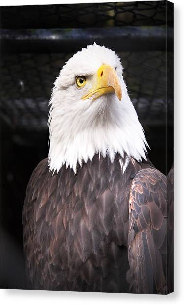 Eagles Canvas Print - The Commander by Julius Reque