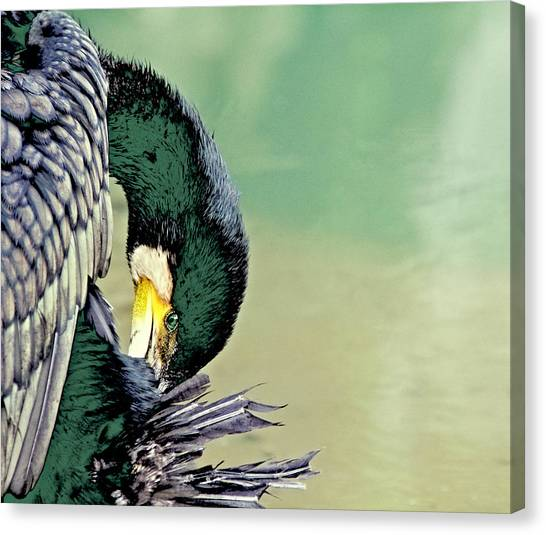 The Cormorant Canvas Print
