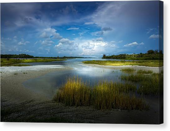 Mangrove Trees Canvas Print - The Cove by Marvin Spates