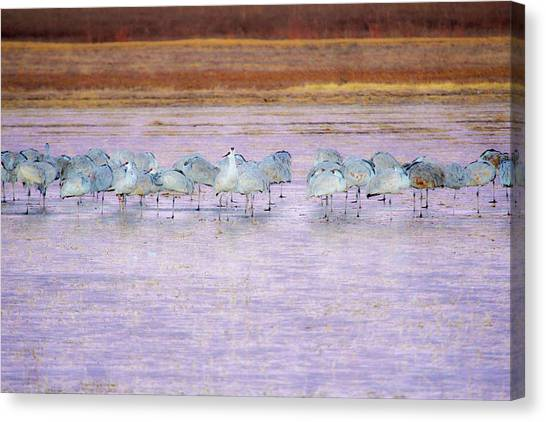 The Cranes Of Bosque Canvas Print