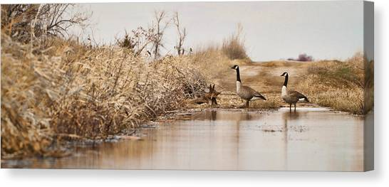 The Crossing Canvas Print by Patrick Ziegler