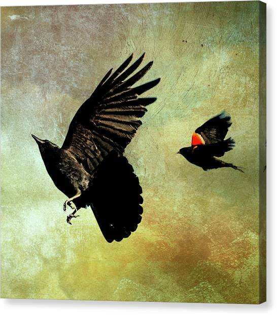 The Crow And The Blackbird Canvas Print