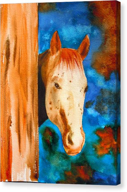 The Curious Appaloosa Canvas Print