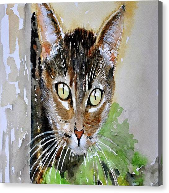 The Curious Tabby Cat Canvas Print