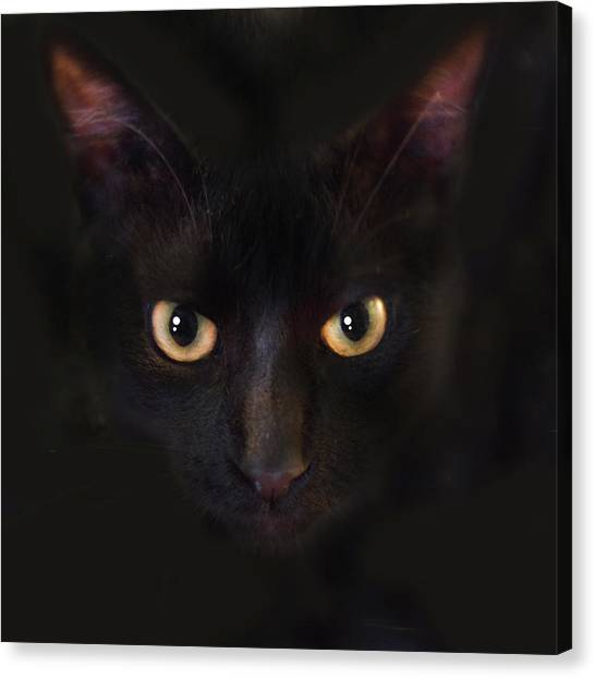 The Dark Cat Canvas Print