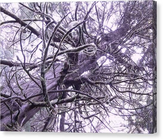 The Deception Tree Canvas Print