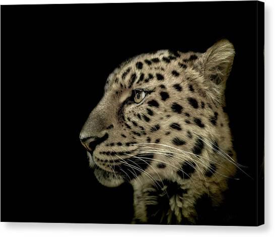 Leopard Canvas Print - The Defendant by Paul Neville