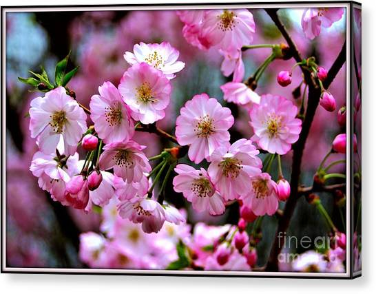 The Delicate Cherry Blossoms Canvas Print