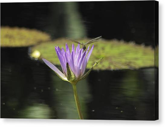 The Dragonfly And The Lily Canvas Print