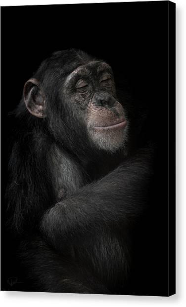 Chimpanzees Canvas Print - The Dream Catcher by Paul Neville