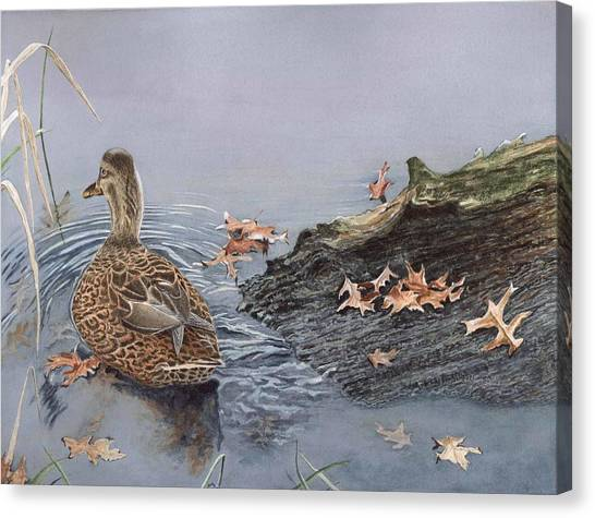 The Duck And The Alligator Canvas Print