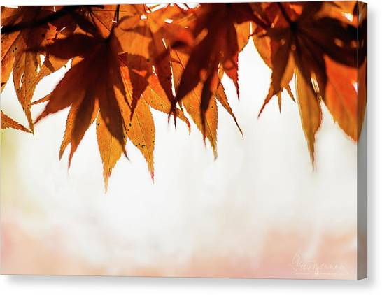 Canvas Print featuring the photograph The Eaves Of Season by Gene Garnace