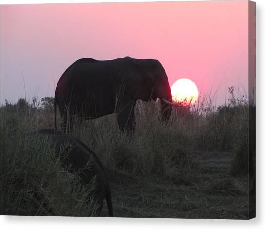 The Elephant And The Sun Canvas Print