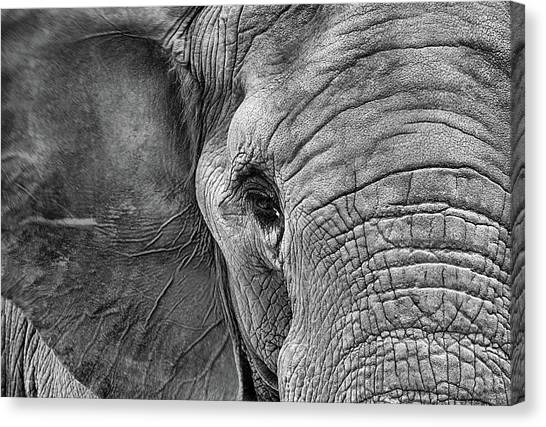 The Elephant In Black And White Canvas Print