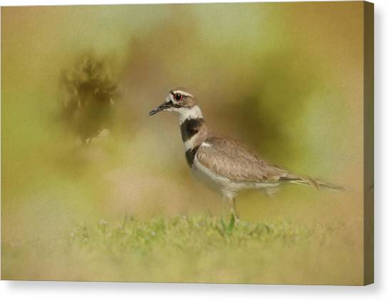 Killdeer Canvas Print - The Elusive Killdeer by Jai Johnson