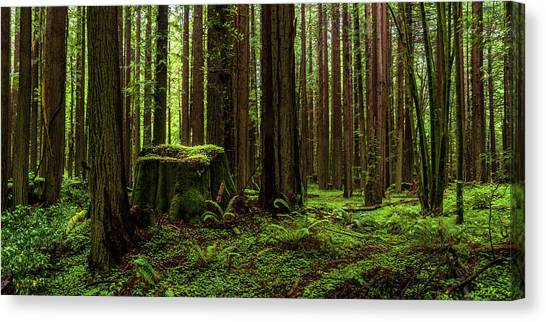 The Emerald Forest Canvas Print