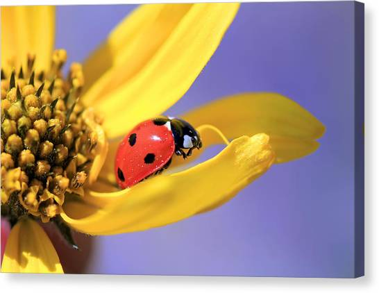 Ladybugs Canvas Print - The End by Donna Kennedy
