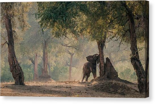 Seasons Canvas Print - The End Of The Dry Season by Giovanni Casini