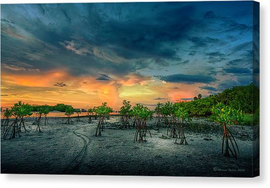 Mangrove Trees Canvas Print - The Endless Trail by Marvin Spates
