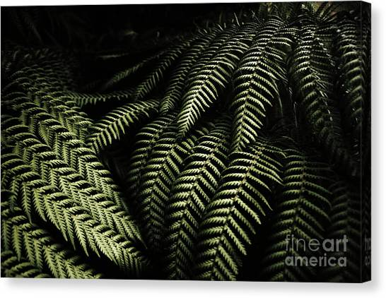 Rain Forest Canvas Print - The Exotic Dark Jungle by Jorgo Photography - Wall Art Gallery