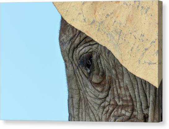 The Eye Of An Elephant Canvas Print