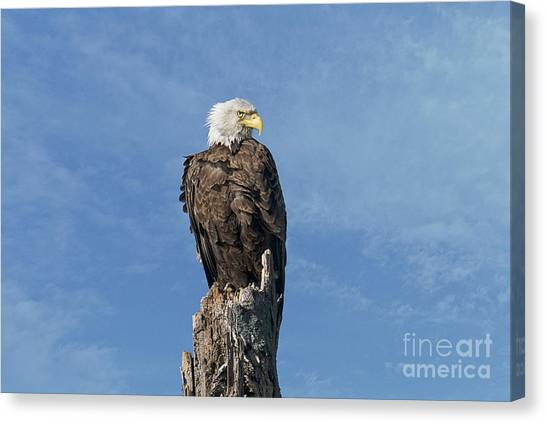 Canvas Print featuring the photograph The Eye Of Freedom by Craig Leaper