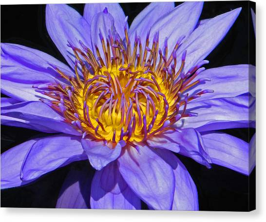 The Eye Of The Water Lily Canvas Print