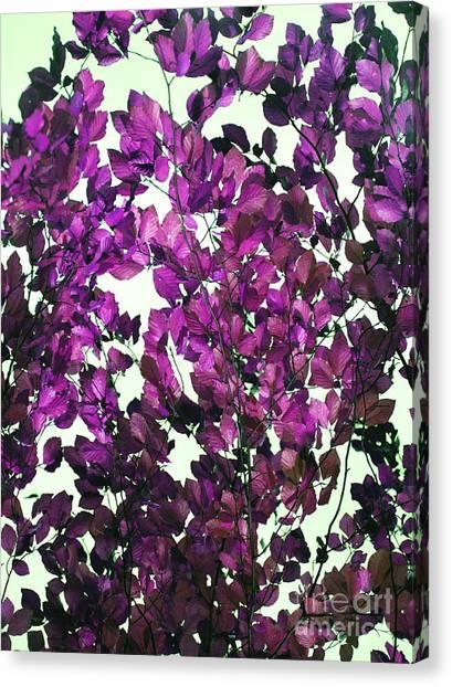 The Fall - Intense Fuchsia Canvas Print