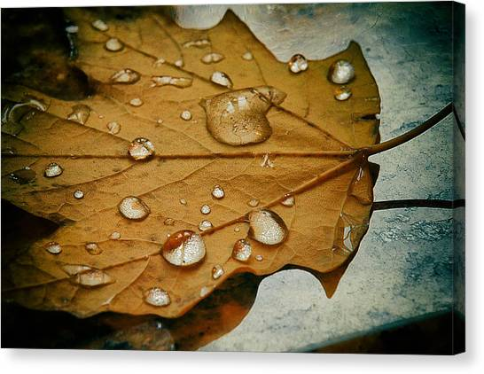 The Fallen Leaf Canvas Print