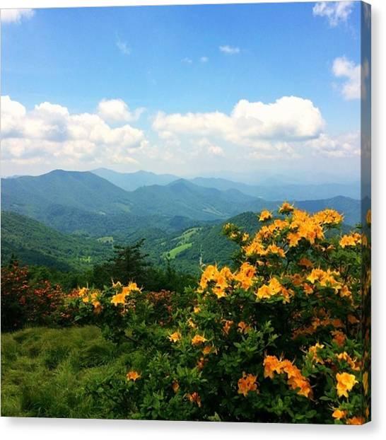 Appalachian Mountains Canvas Print - Flame Azaleas  by Jessica Overmier