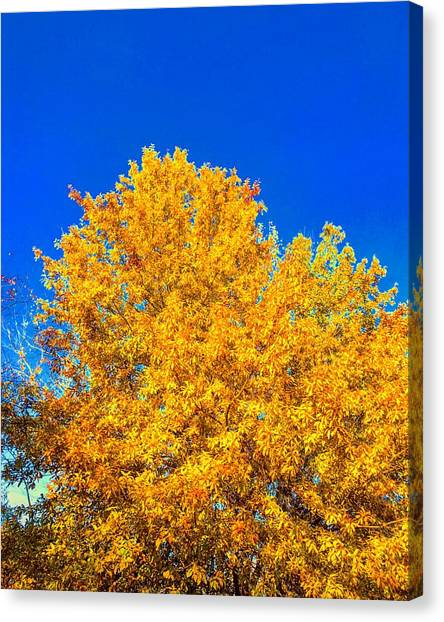 The Flare Of Fall On A Clear Day Canvas Print