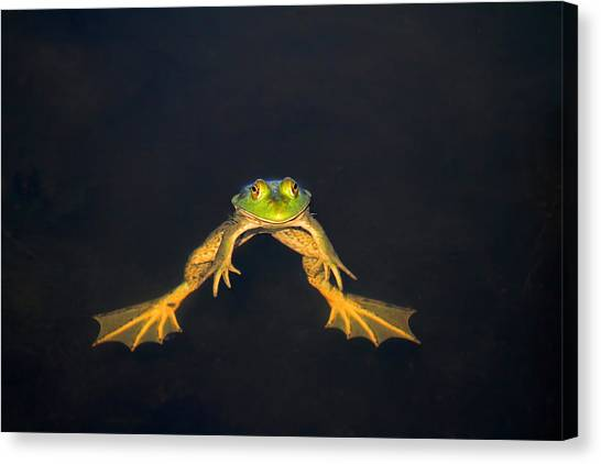 Bullfrogs Canvas Print - The Floater by Donna Kennedy