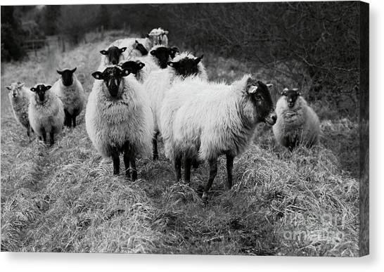 The Flock 1 Canvas Print